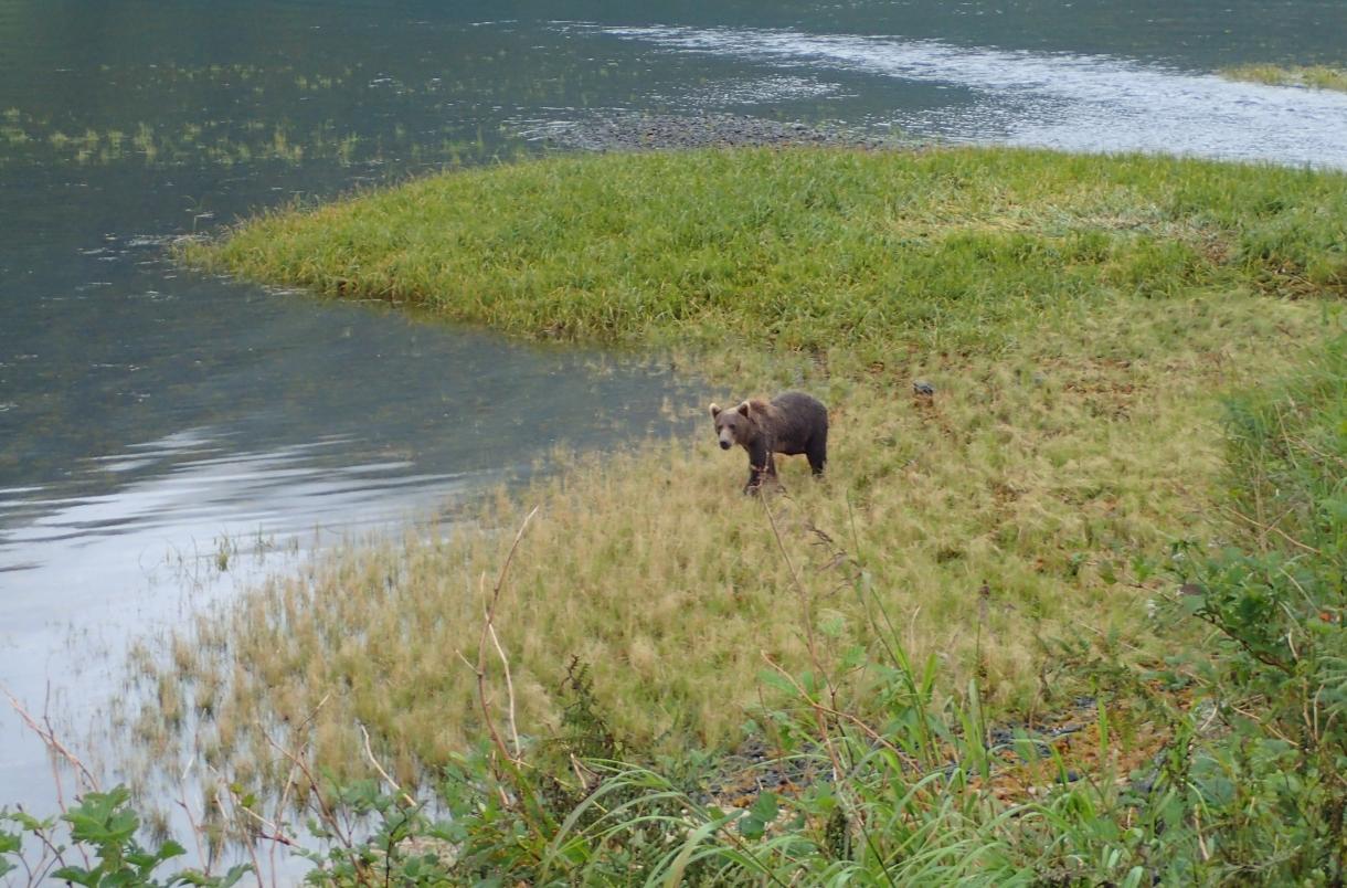 Bear-visitor